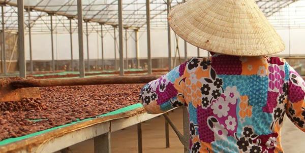hạt cacao có hương vị tốt