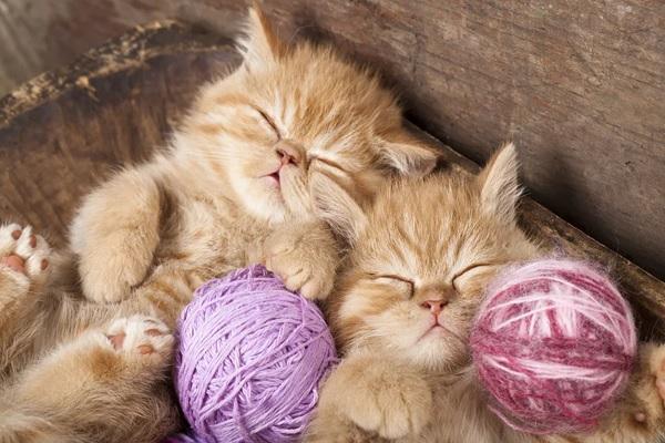 hình ảnh con mèo đang ngủ